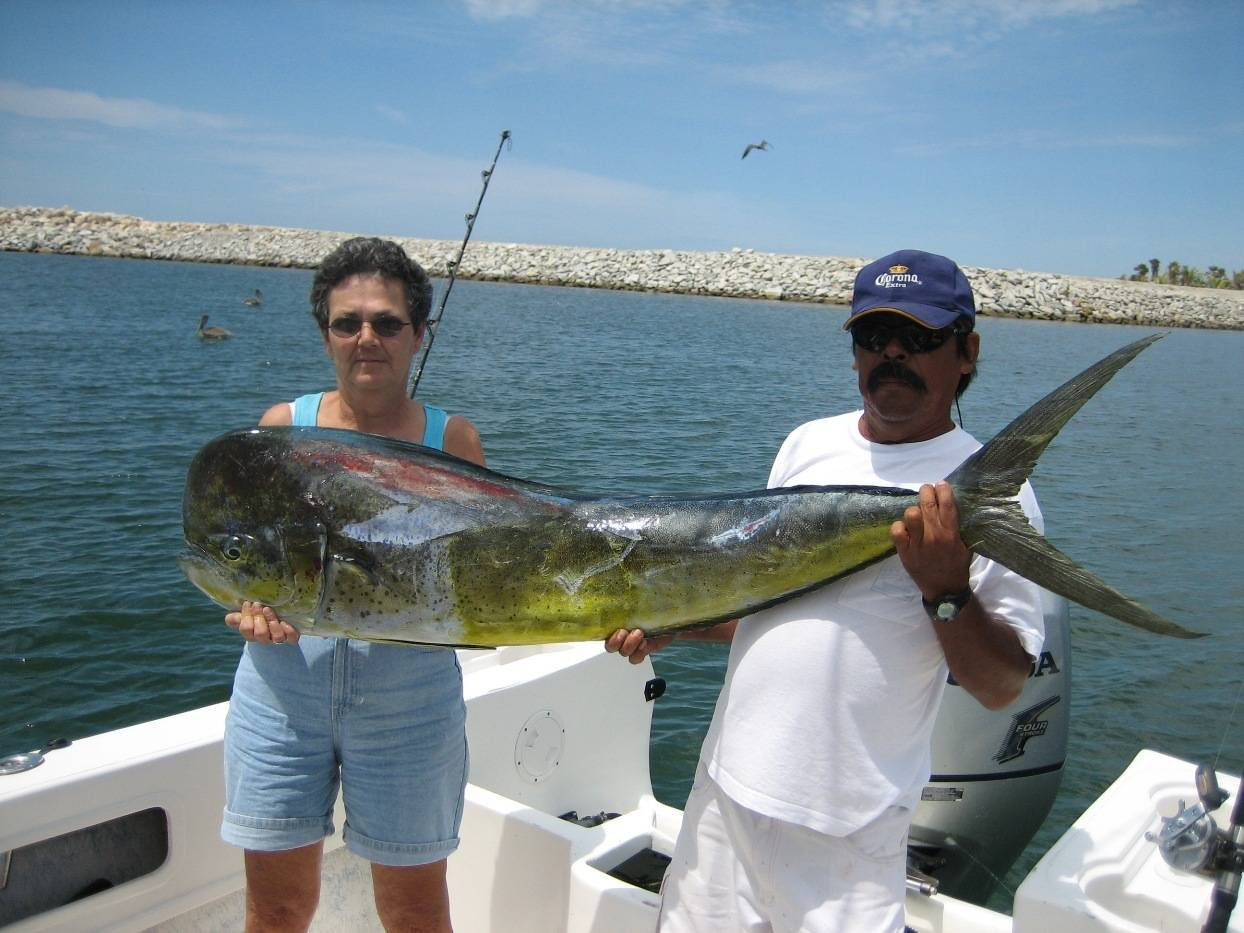 san jose del cabo fish report july 13 bloodydecks