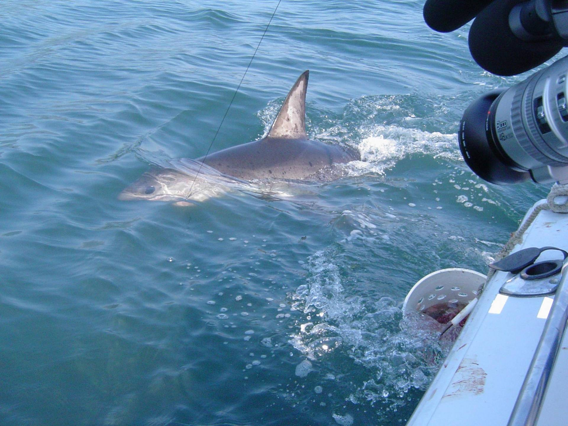 New 2011 california fishing licenses suck bloodydecks for Fishing without a license california