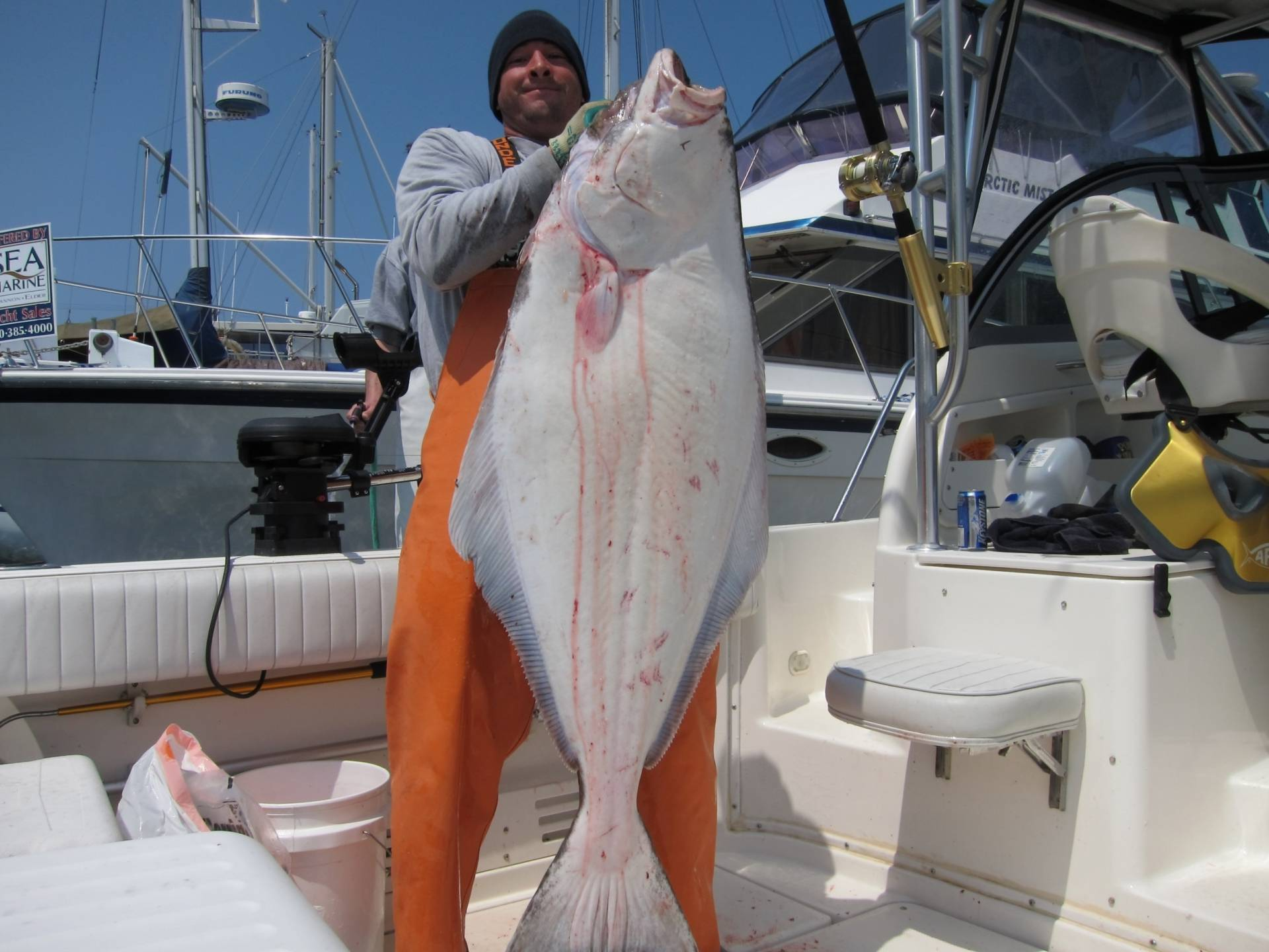 Introduction bigling 2011 halibut report pic heavy bloodydecks even though the fish weighed in at 59lbs a photo op was in order lesson learned weigh in nice fish right away dont bleed your fish and let it dry out nvjuhfo Image collections