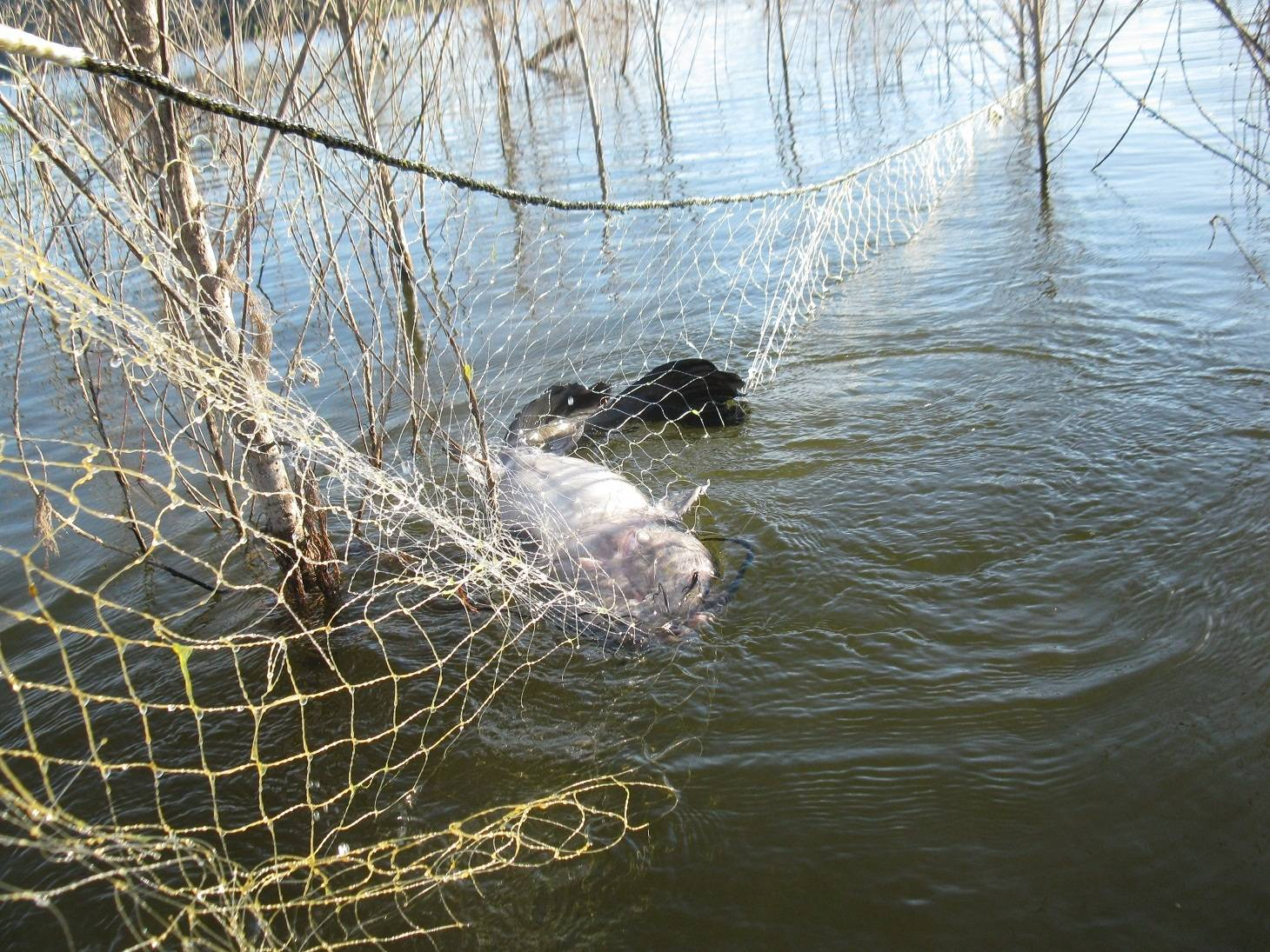 Lake hodges poachers bloodydecks for Lake hodges fishing