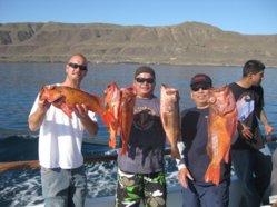 Rockfish 2012 012.jpg