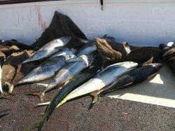 fishing-2012-38.jpg