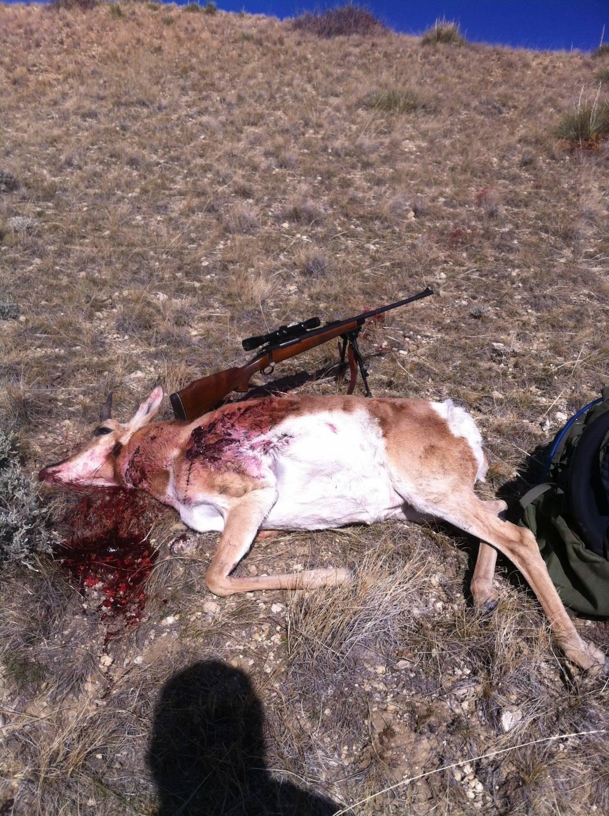 Wyoming Antelope DIY | Bloodydecks