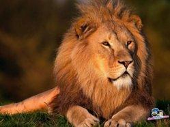 lions-27a.jpg