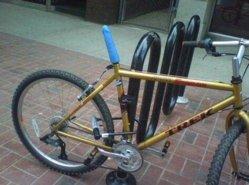 Saluki's bike.jpg