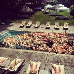 Saluki's pool party.jpg