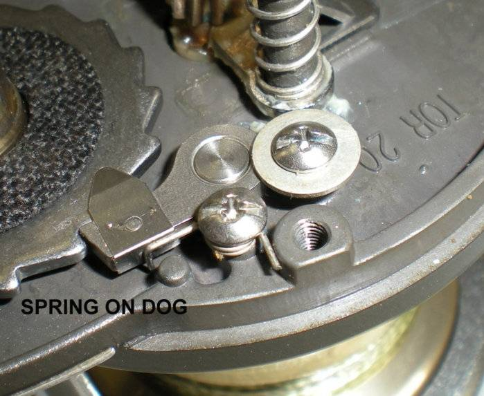 modified dog.jpg