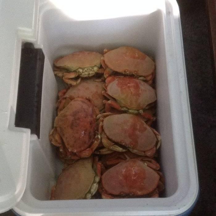 crab June 2015.JPG