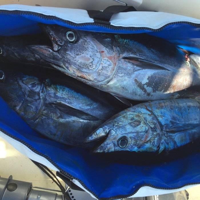 bluefin.JPG