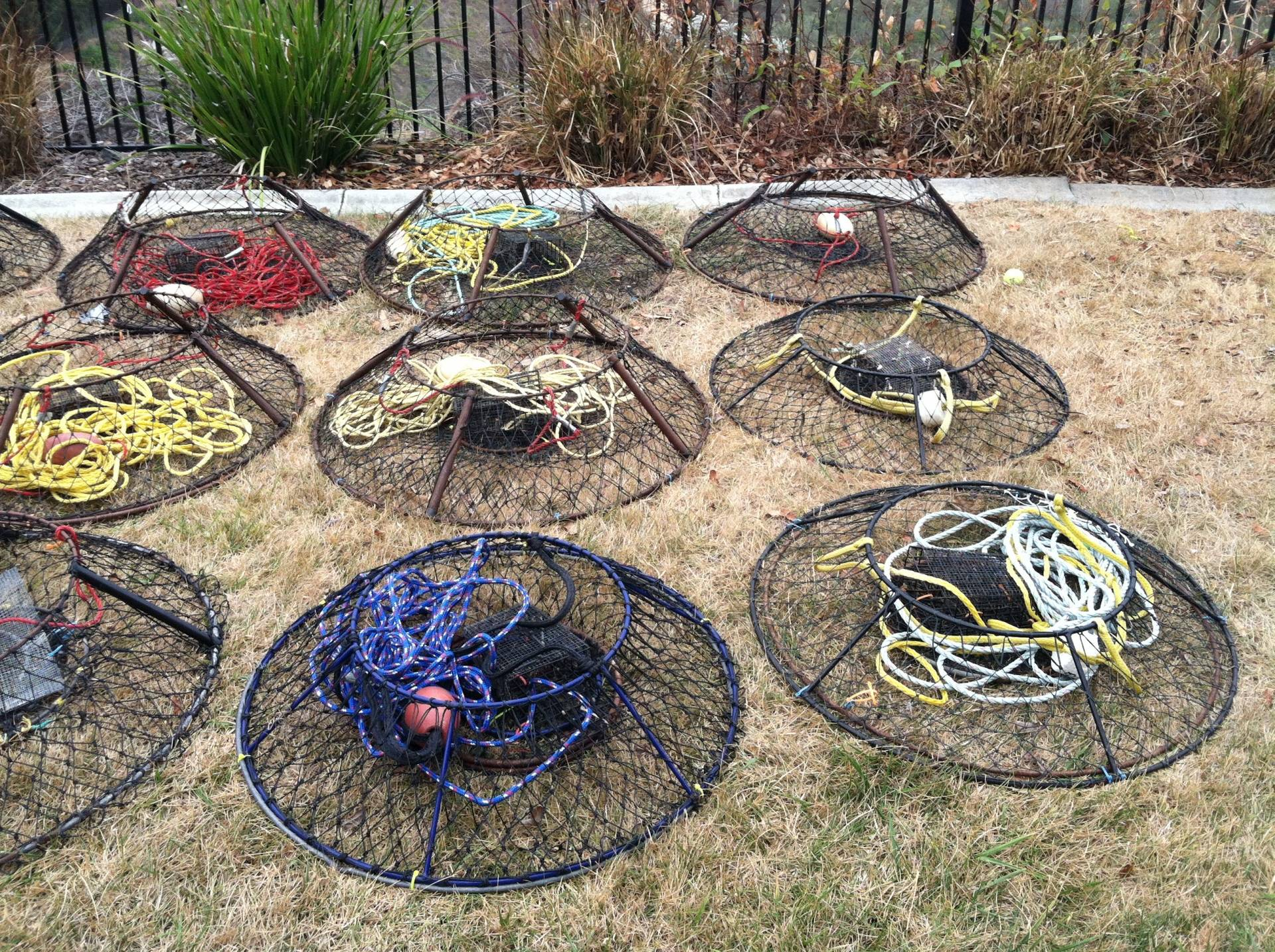 19 hoop nets for sale saltwater fishing forums for Hoop net fishing