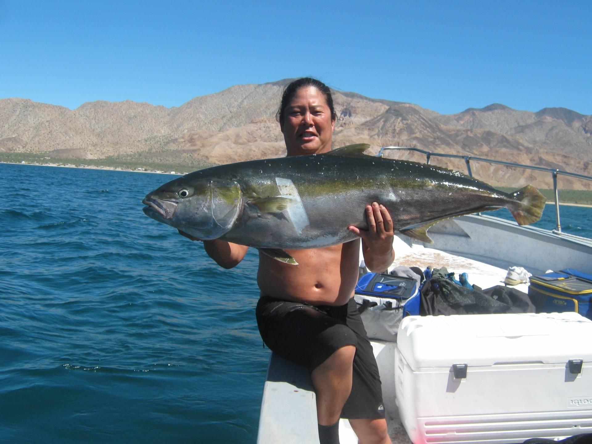 Bahia de los sportfishing for Los angeles fishing charters
