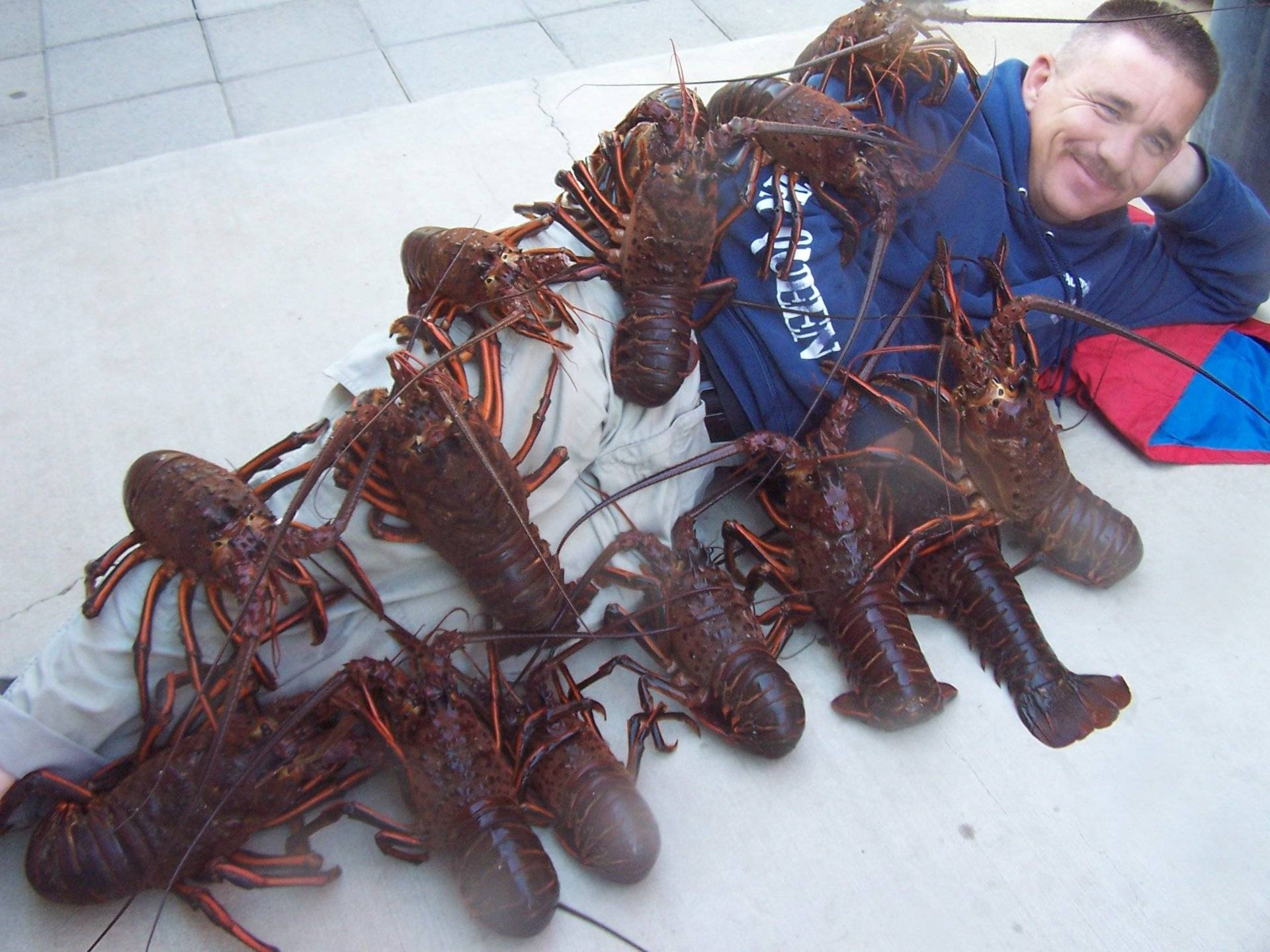 Once Again the California Spiny Lobster Beckons | Bloodydecks