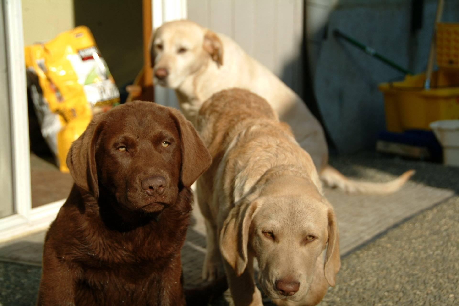 Pups May 2008 006.jpg