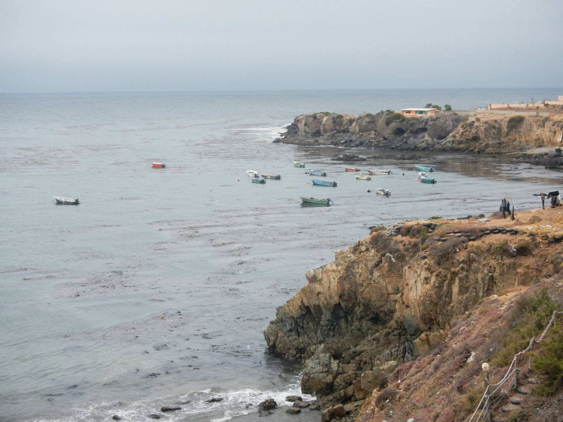 La jolla bait invasion saltwater fishing forums for La jolla fishing