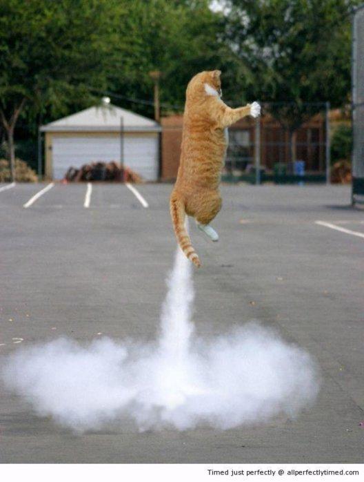 cat Ballistic.jpg