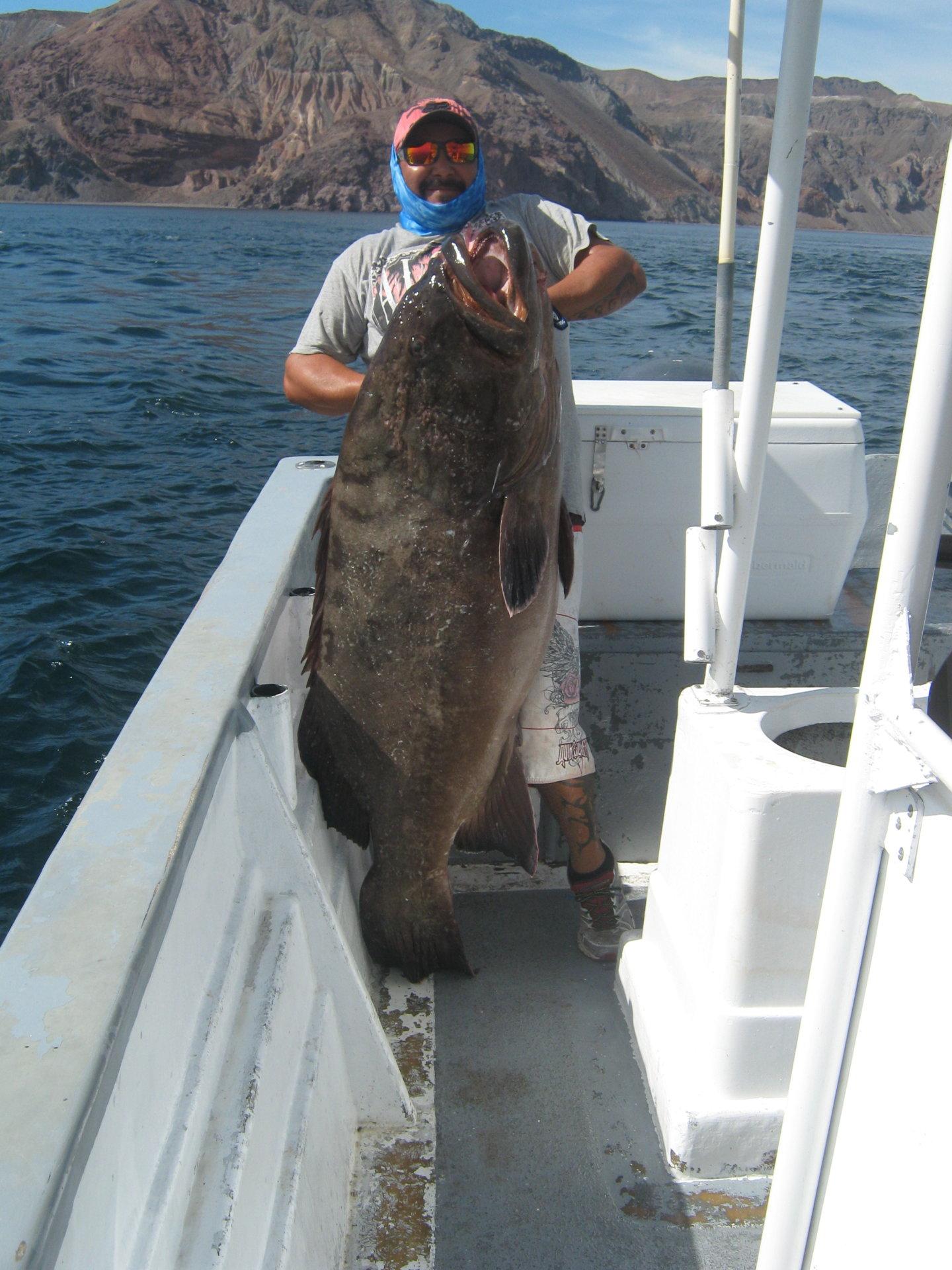 Bahia de los angeles b c daggett 39 s sport fishing 27 oct for Fishing in los angeles