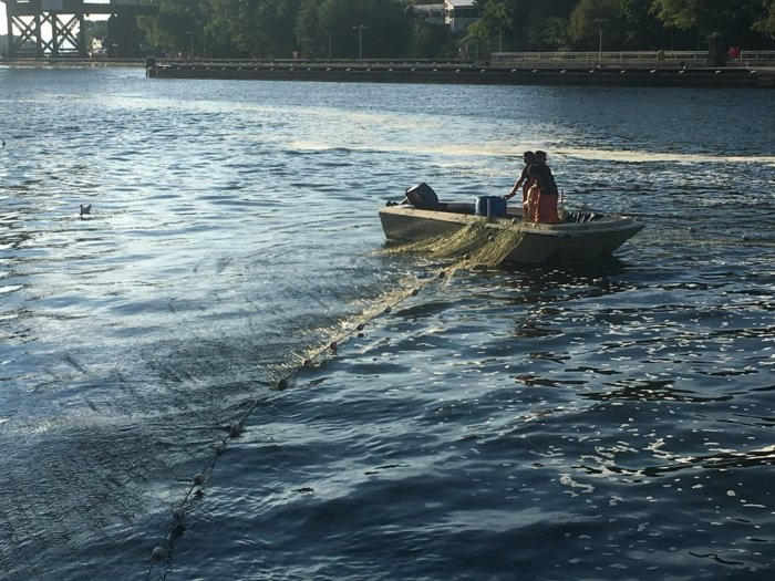 Lake wa sockeye fishery bloodydecks for Wa fishing license cost