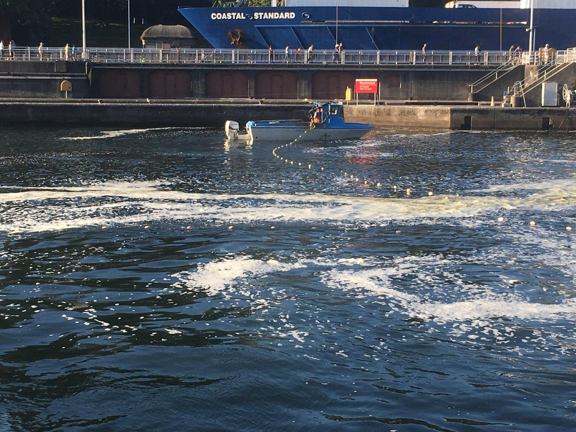 Lake wa sockeye fishery bloodydecks for Washington fishing license cost