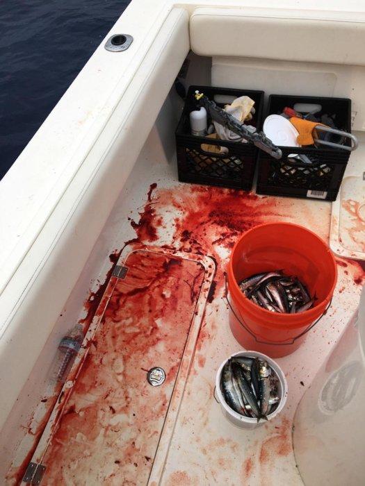 Bloody deck.jpg