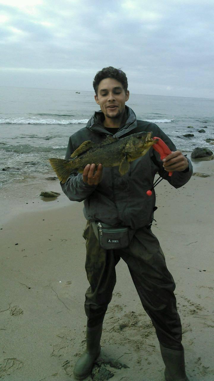 Surf calico bass fishing is fun bloodydecks for Calico bass fishing