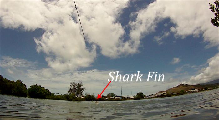 HH Shark.png