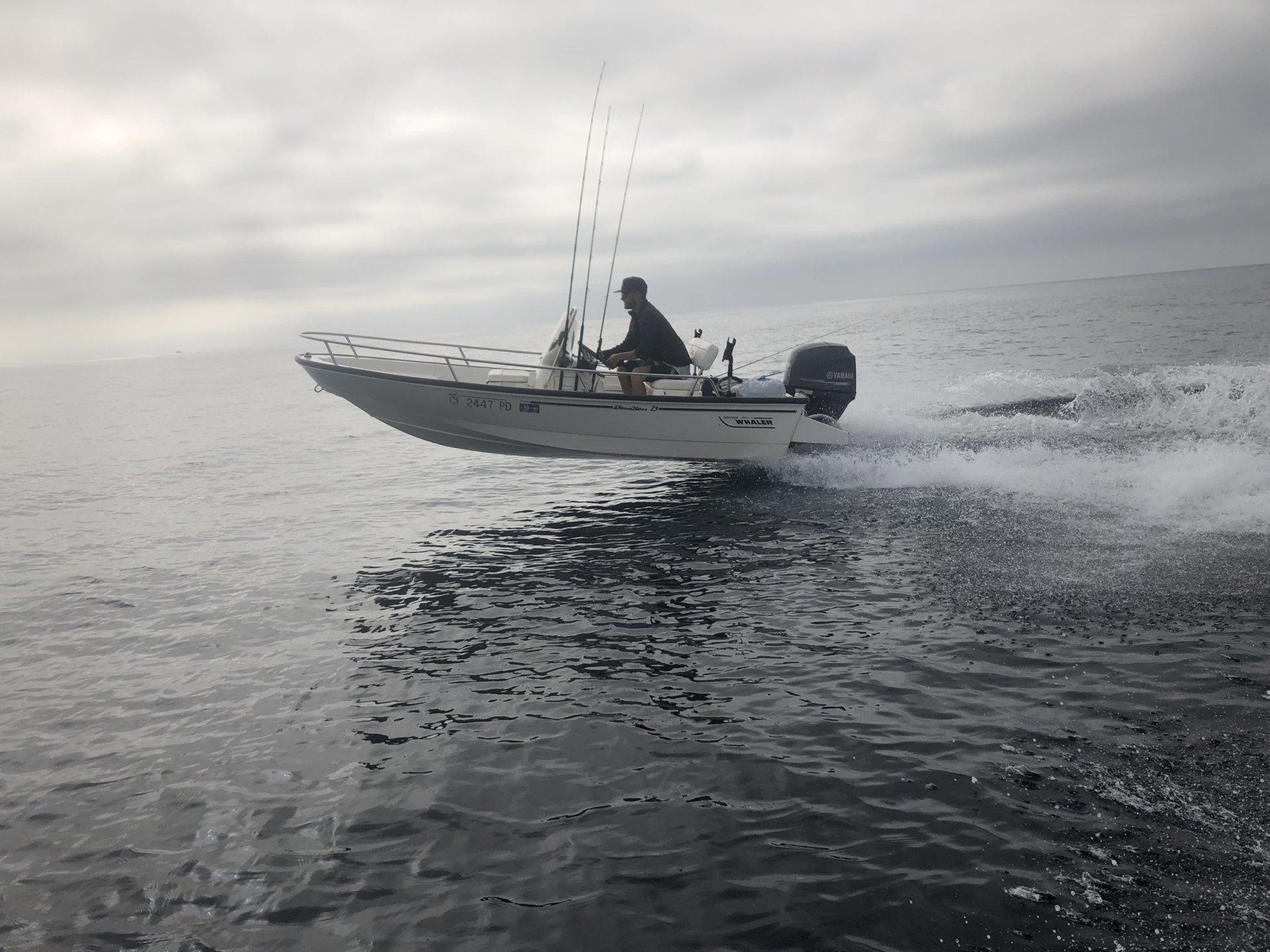 SOLD - Boston Whaler 13' Dauntless   Bloodydecks