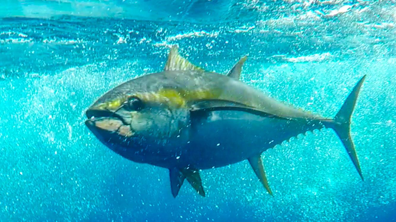 TunaPocoLoco.jpg